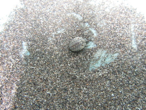 石狩浜生き物つながり_f0354435_14155476.jpg