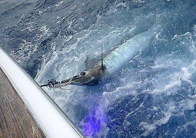 BZ艇さんから釣果報告_f0009039_09314424.jpg