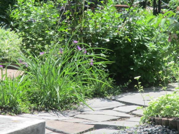 爽やかな夏の日にはスムージーがいい_a0279743_11232807.jpg