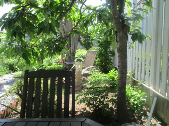 爽やかな夏の日にはスムージーがいい_a0279743_11234190.jpg