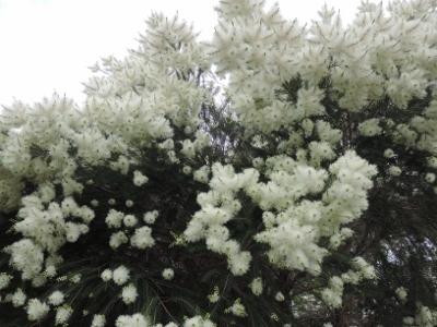 梅雨に咲く花_e0099359_16223478.jpg