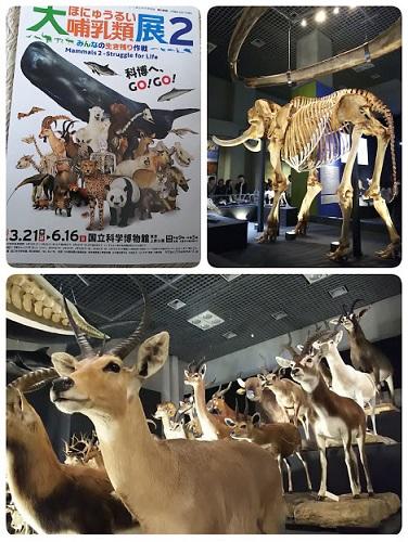 「大哺乳類展2」へ_f0043559_1784038.jpg
