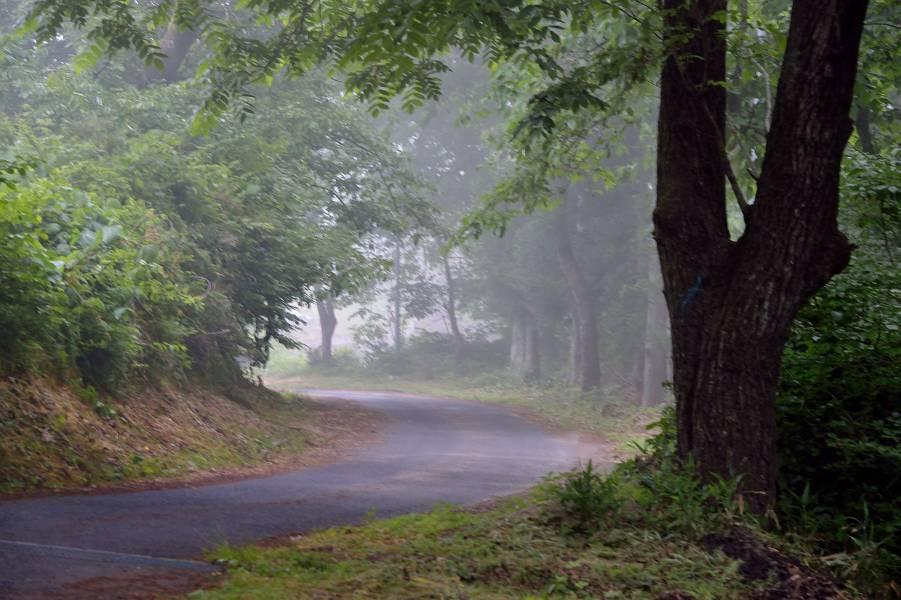 濃霧_b0223668_06232368.jpg