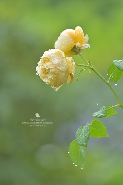 雨 雨_c0319774_18115777.jpg
