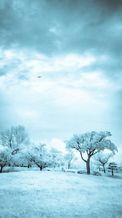 凍りついた梅雨の公園_d0353489_17462706.jpg
