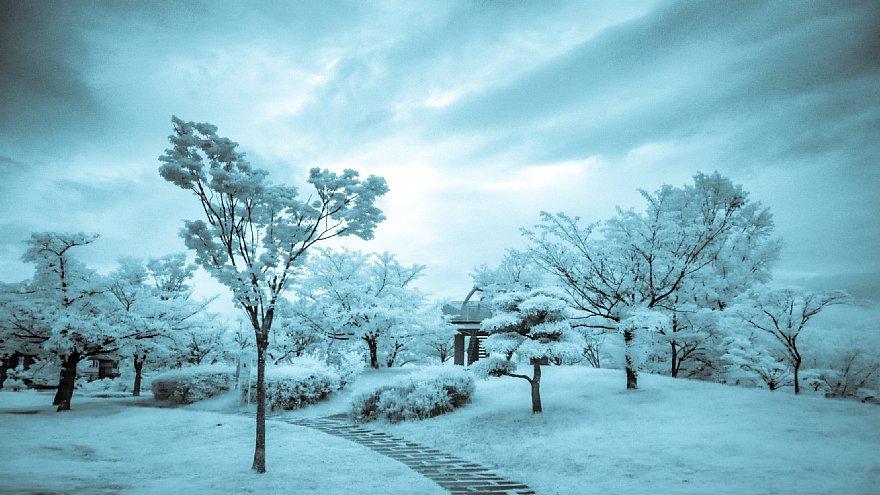 凍りついた梅雨の公園_d0353489_17463236.jpg