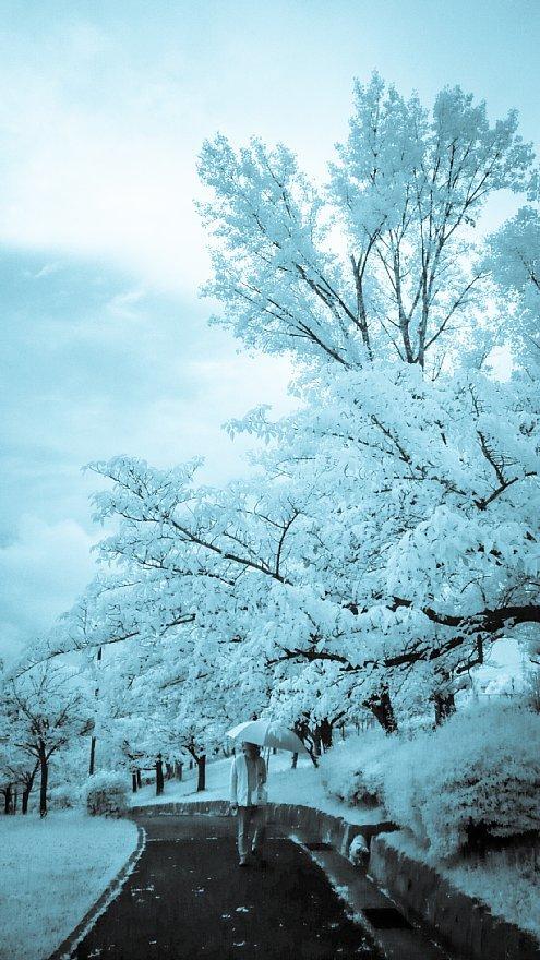 凍りついた梅雨の公園_d0353489_17463936.jpg