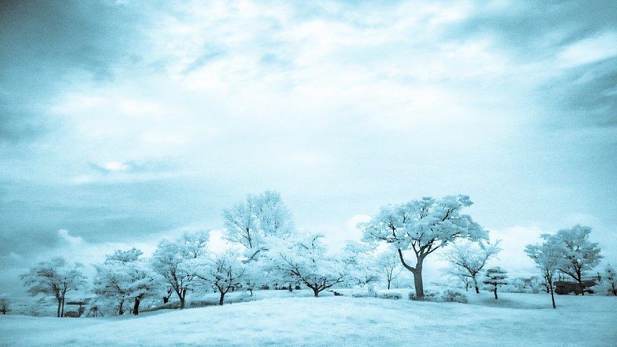 凍りついた梅雨の公園_d0353489_17464792.jpg
