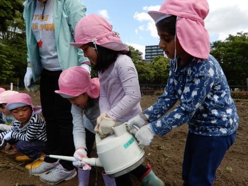 【南砂】芋の苗植え_a0267292_10525778.jpg