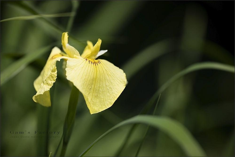 Yellow_f0195893_06290666.jpg