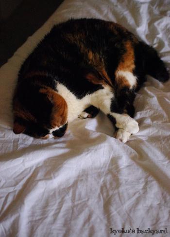 ベッドの上でお昼寝中_b0253205_01451559.jpg