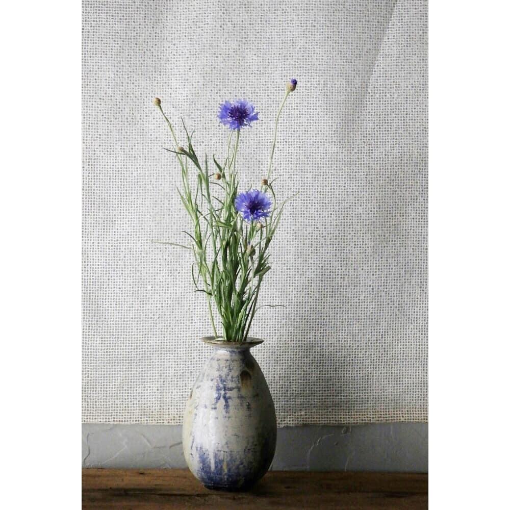 煎茶と花 - 花の章 -_f0351305_23594202.jpg