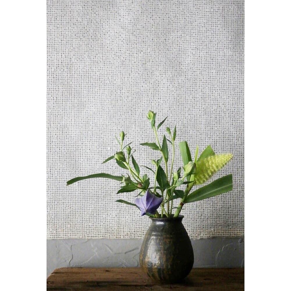 煎茶と花 - 花の章 -_f0351305_23595935.jpg