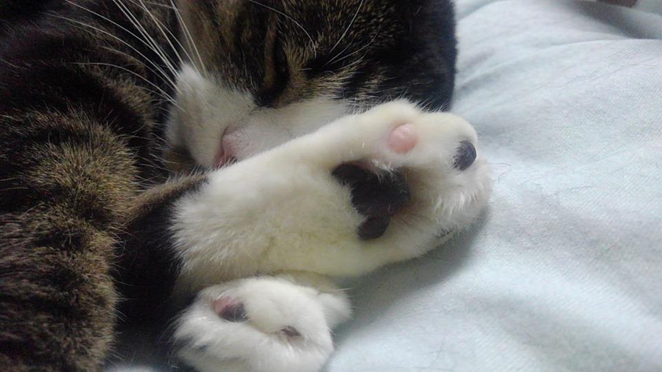 【猫】朝から…_f0141609_20323938.jpg