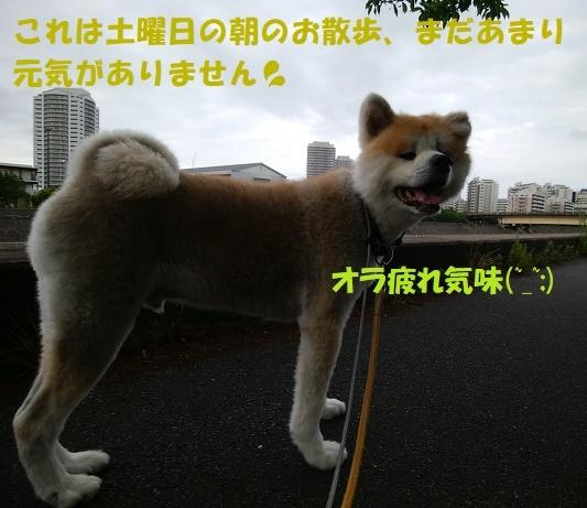 f0121712_15232621.jpg