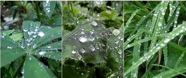 雨が降ります雨が降る_e0234924_05151358.jpg