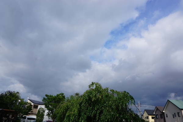 梅雨の楽しみ_a0166025_13581302.jpg