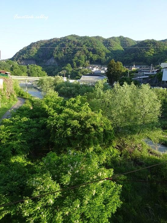 早朝散歩 ニセアカシア_d0356844_13155978.jpg