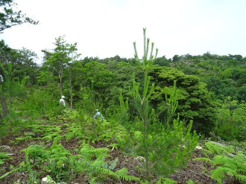 南尾根の間伐の継続作業・・・孝子の森_c0108460_18560457.jpg