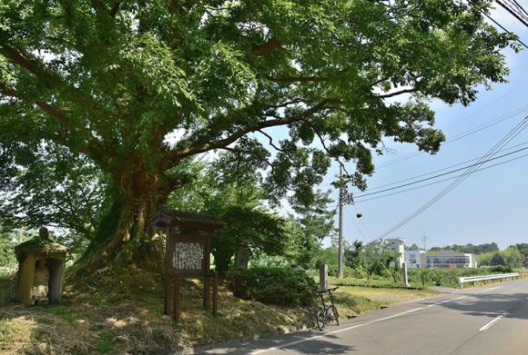 北国街道 金津から加賀温泉を行く_e0164563_13434253.jpg