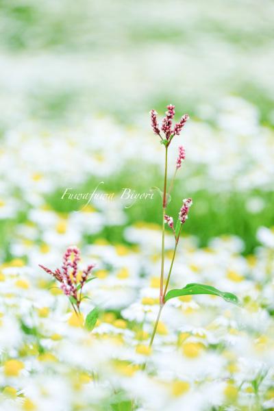 Aoyama Resort **_d0344864_22440781.jpg