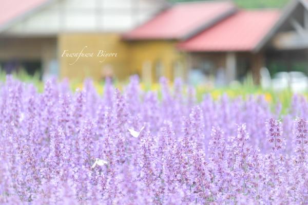 Aoyama Resort 蝶々編 **_d0344864_22590315.jpg