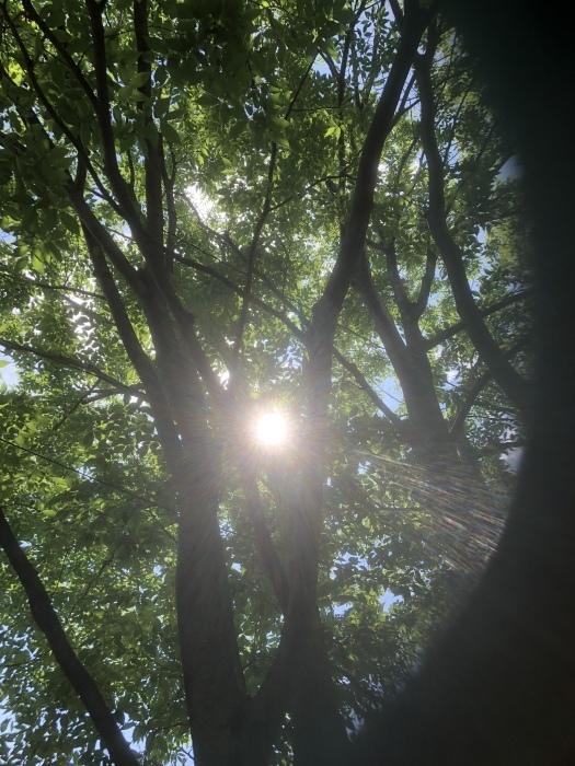太陽と私_d0105967_22445699.jpeg