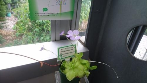 食虫植物_f0228967_21461268.jpg