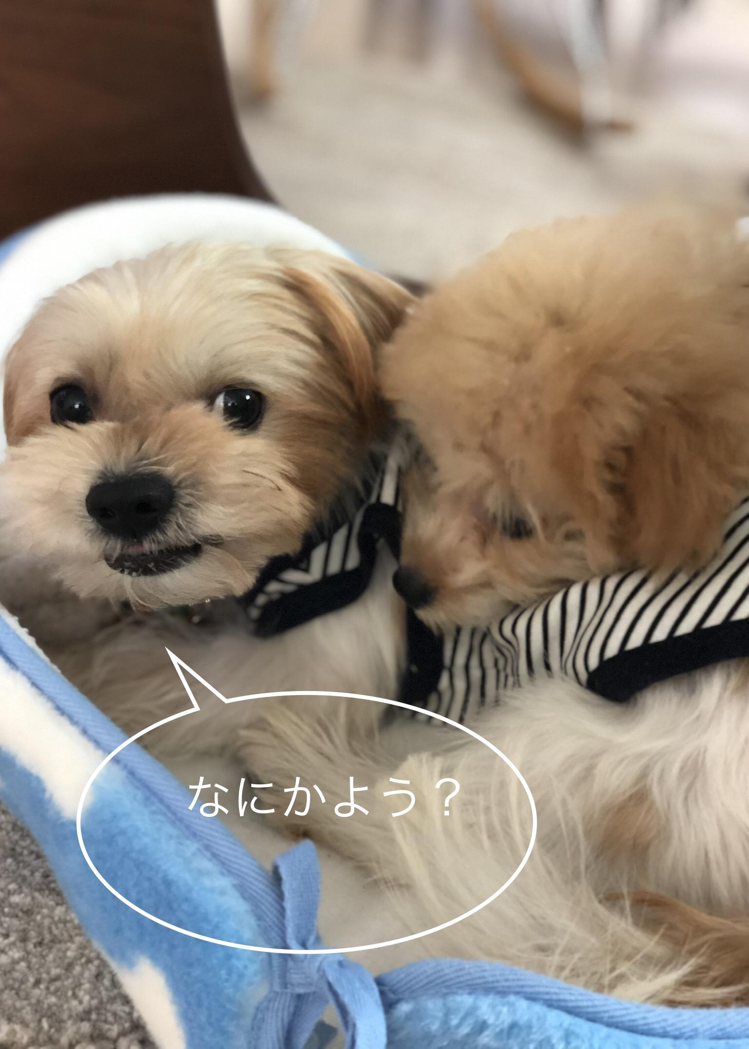 ポパイくんとつむぎちゃん_d0233672_18183117.jpeg