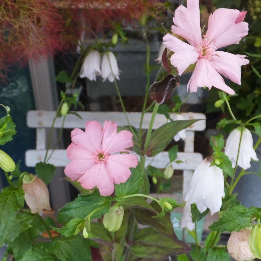 オークリーフ(6月の花たち)_f0049672_13021159.jpg