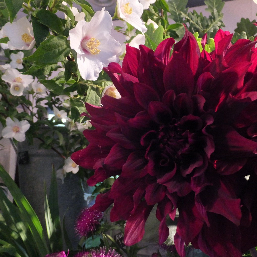 オークリーフ(6月の花たち)_f0049672_13022119.jpg