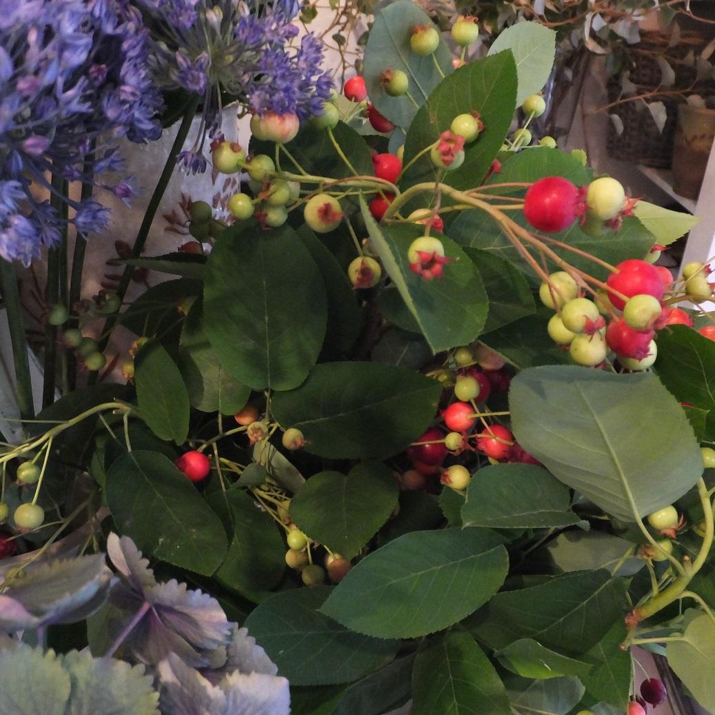 オークリーフ(6月の花たち)_f0049672_13022445.jpg