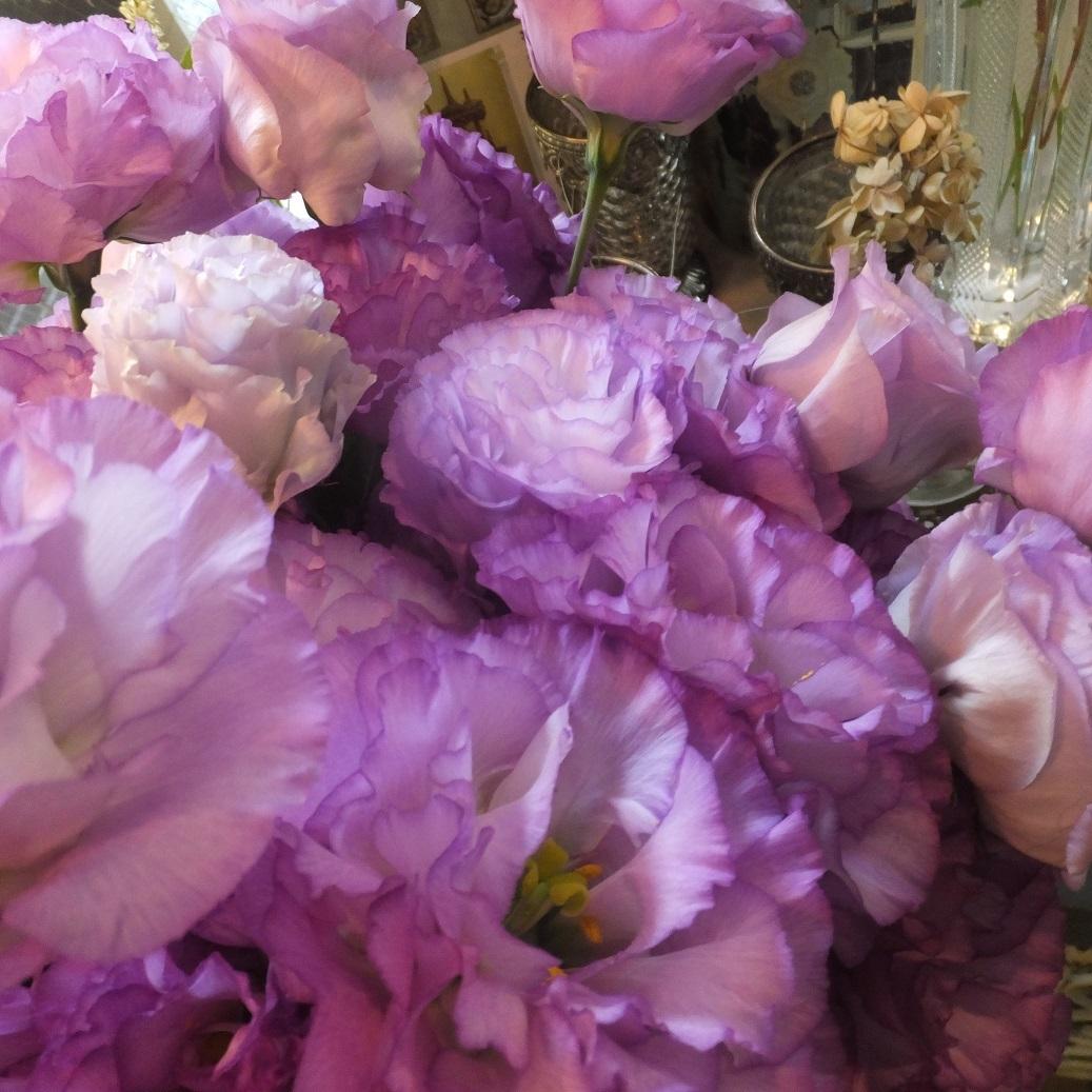 オークリーフ(6月の花たち)_f0049672_13035439.jpg