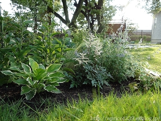 梅雨の庭しごと 庭に咲いた低木と宿根草の花_c0293787_18080946.jpg