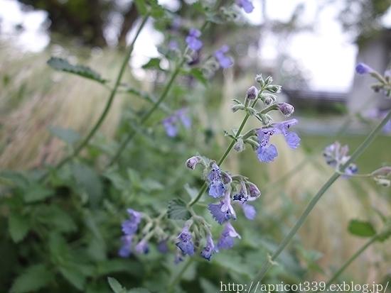 梅雨の庭しごと 庭に咲いた低木と宿根草の花_c0293787_18083173.jpg