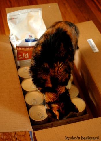 隊長の猫缶チェック / アメリカでペットの処方食を割安で買う方法_b0253205_02503341.jpg