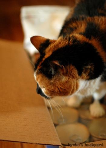 隊長の猫缶チェック / アメリカでペットの処方食を割安で買う方法_b0253205_02504775.jpg