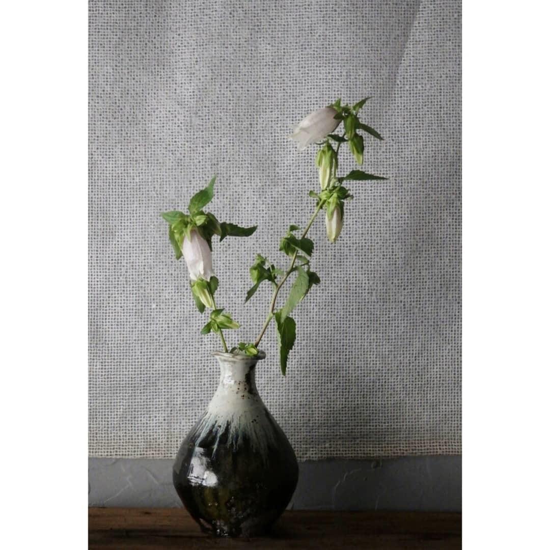 煎茶と花 - 花の章 -_f0351305_00020359.jpg