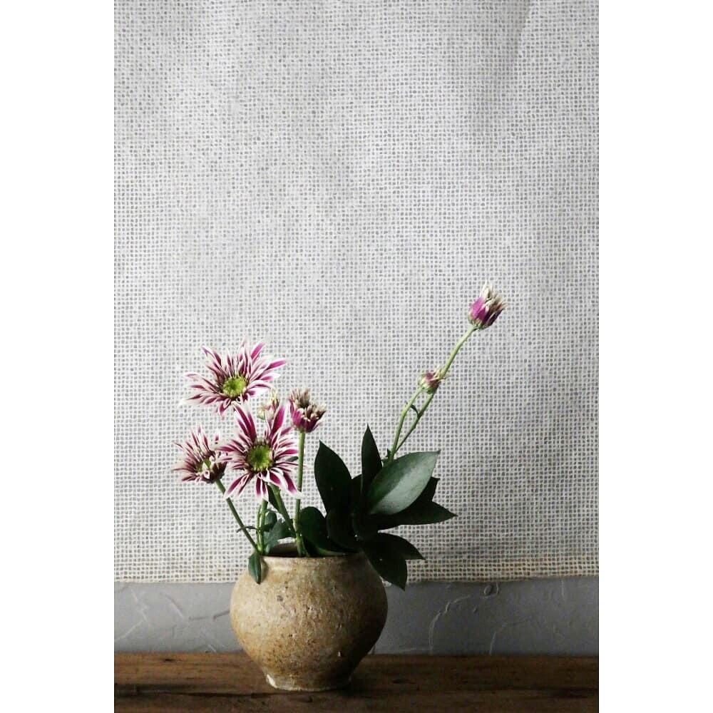 煎茶と花 - 花の章 -_f0351305_00033070.jpg