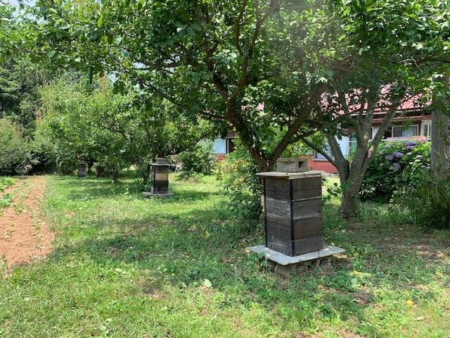 平山旅館梅収穫ツアー行ってきました。_c0125114_15282571.jpg
