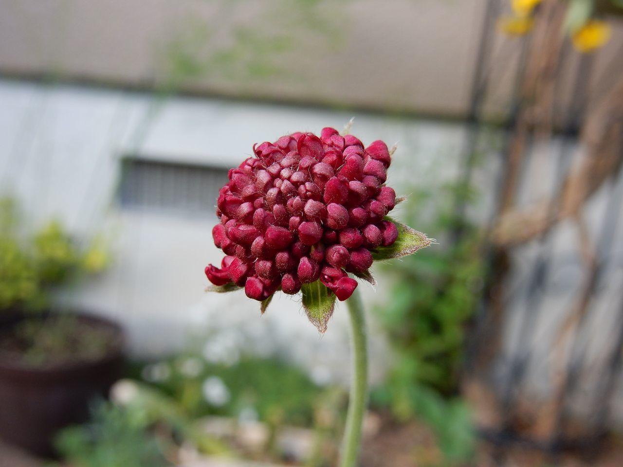 冬を越える植物たち_c0025115_22065131.jpg