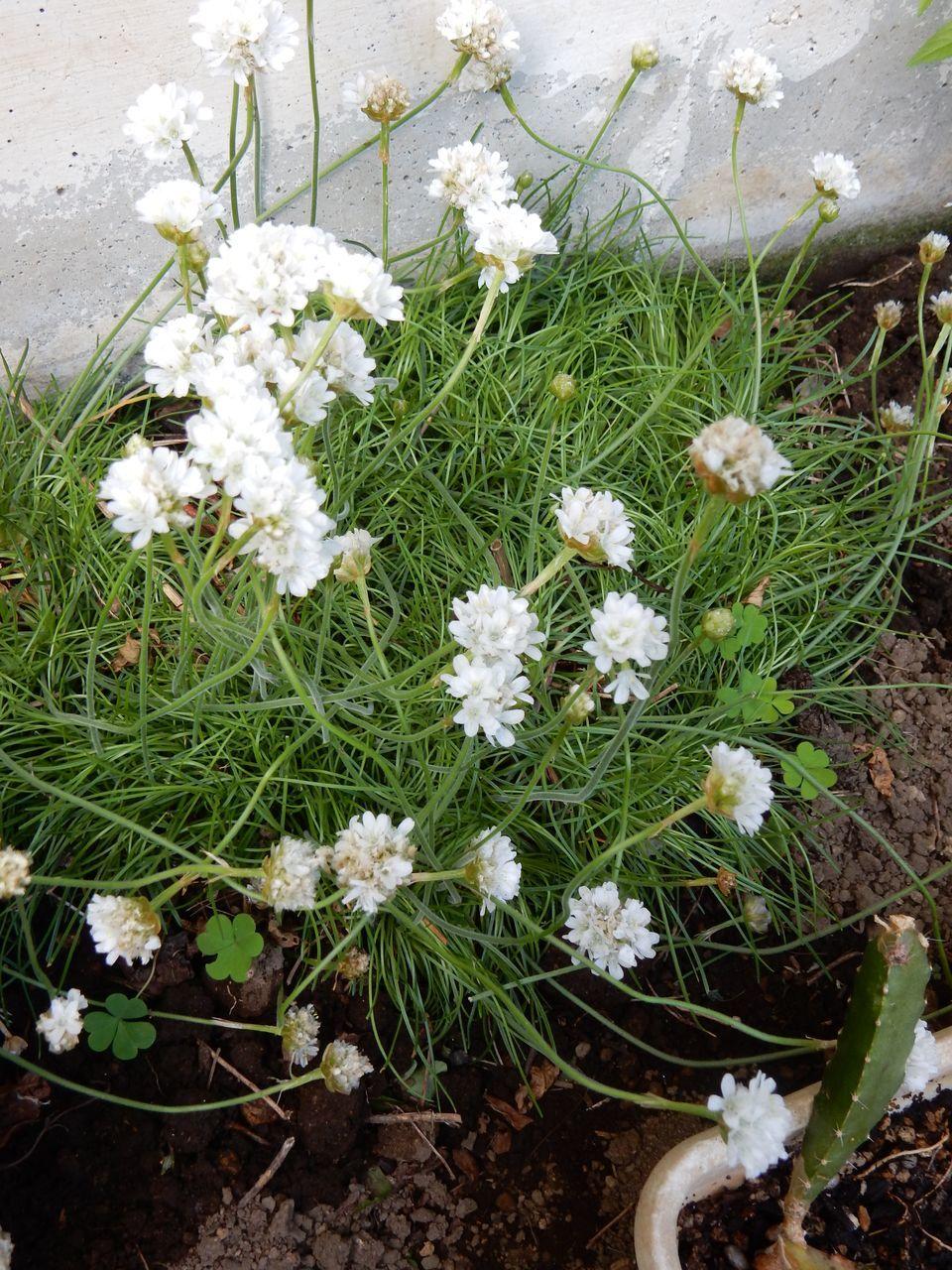 冬を越える植物たち_c0025115_22082677.jpg