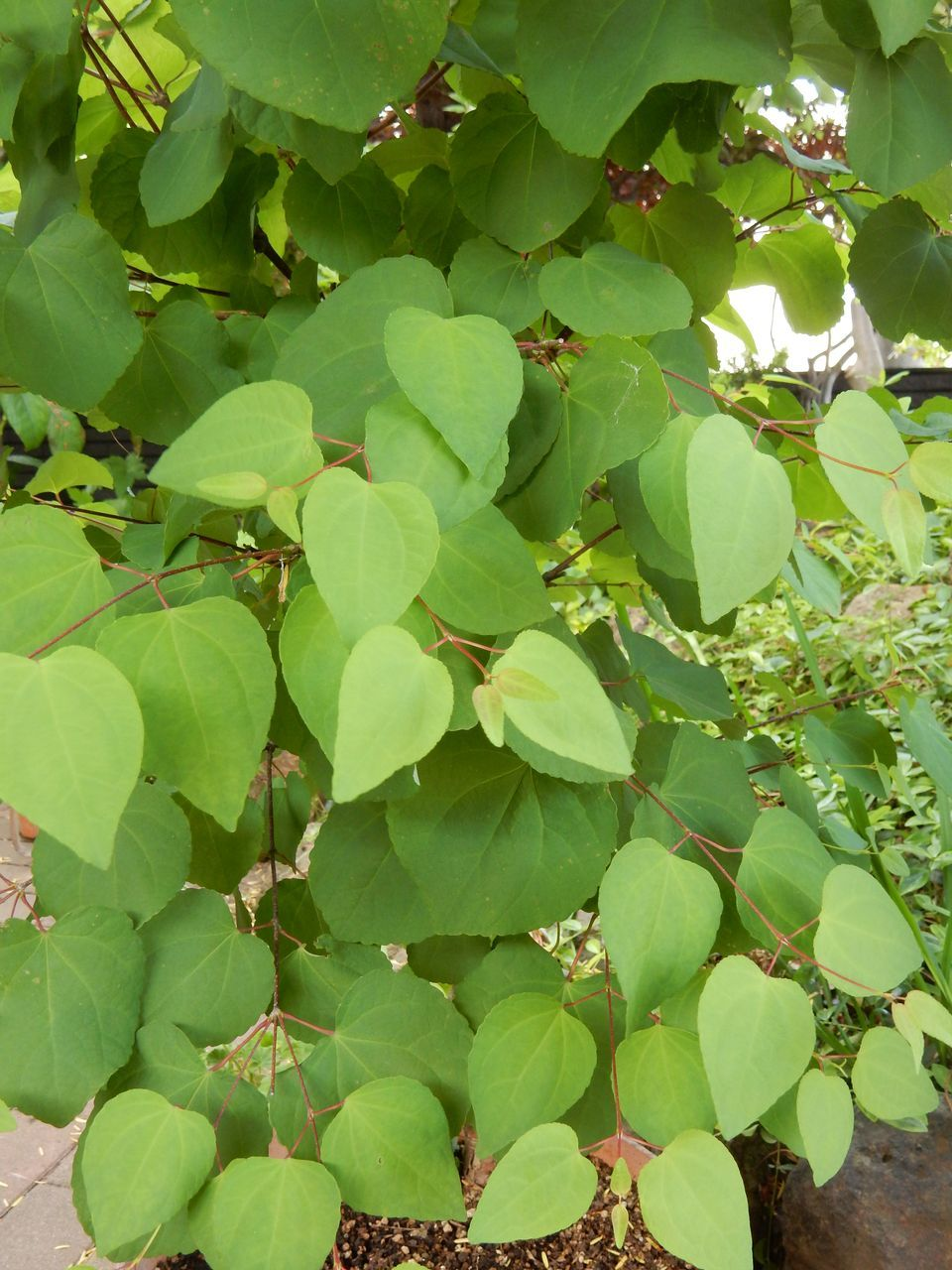 冬を越える植物たち_c0025115_22171916.jpg