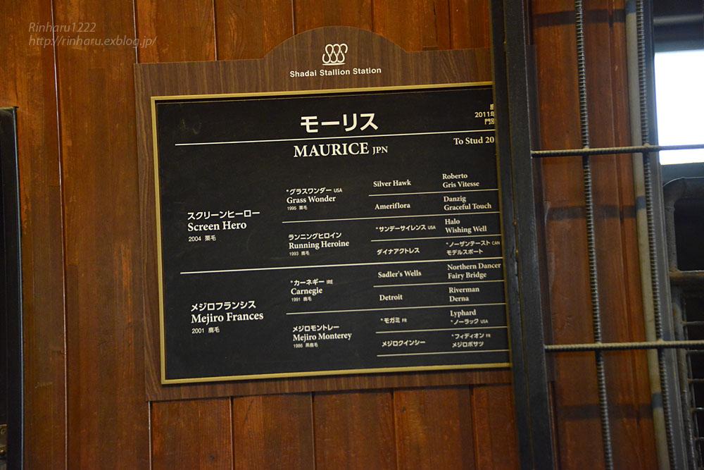 2019.3.20 社台スタリオンステーション☆モーリス【Maurice】_f0250322_21495741.jpg