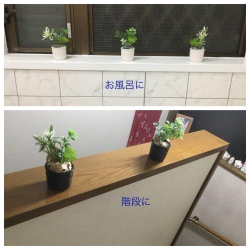 紫陽花 & 簡単拭き掃除のために_a0084343_23041410.jpeg