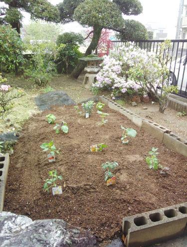 家庭菜園始めました_a0151444_17530652.jpg