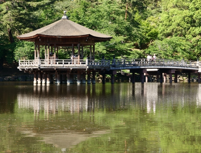 奈良公園 浮見堂  2019-06-17 00:00   _b0093754_21081984.jpg