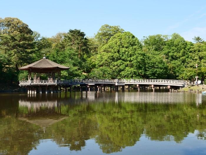 奈良公園 浮見堂  2019-06-17 00:00   _b0093754_21084353.jpg