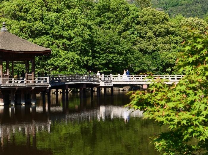 奈良公園 浮見堂  2019-06-17 00:00   _b0093754_21085926.jpg