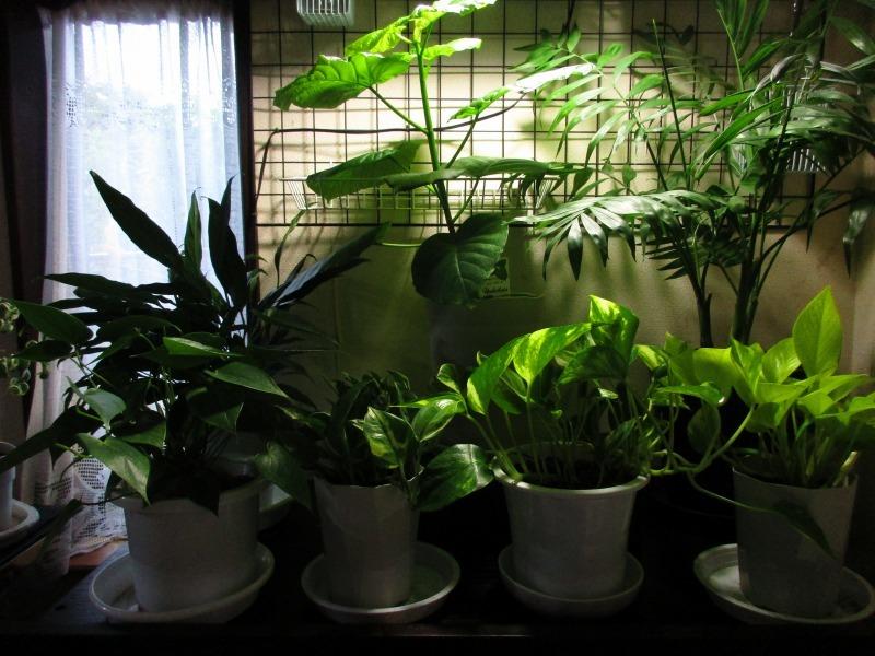 植物「花菖蒲の咲く頃」_b0362459_22271813.jpg